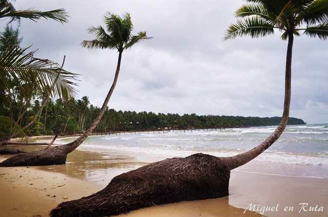 Cocoteros-Tailandia