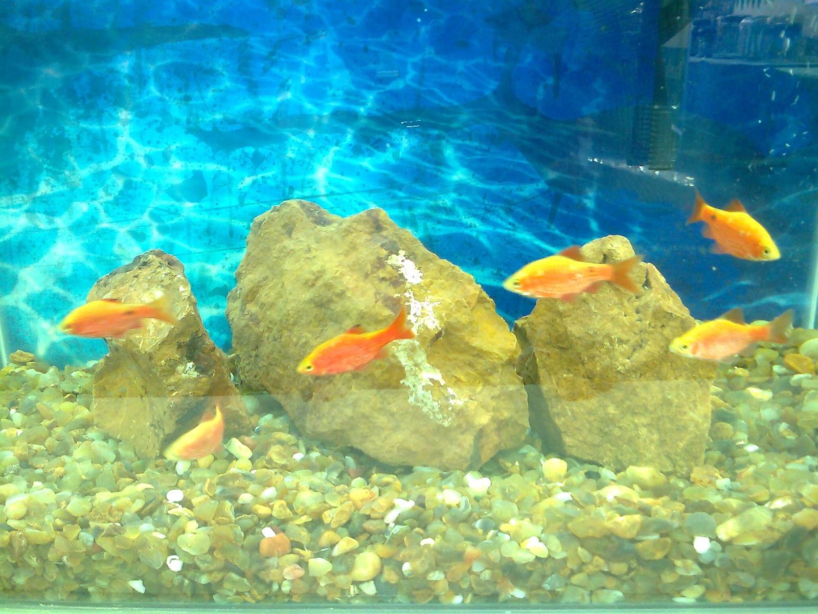 Buy fish for aquarium online bangalore - Aquarium Shop Bangalore