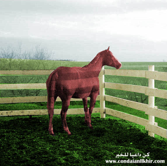 horses picture
