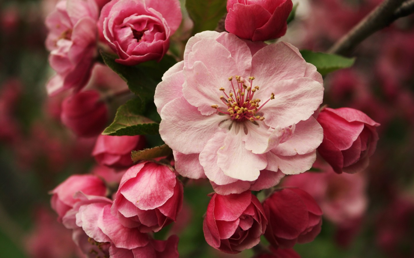 High Definition Flower Wallpapers