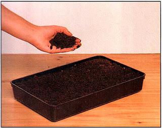 Наполните поднос почвенной смесью для семян — смеси, основанные на глине и торфе, пригодны для большинства семян.