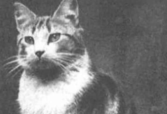Humane Society Stray Cats London