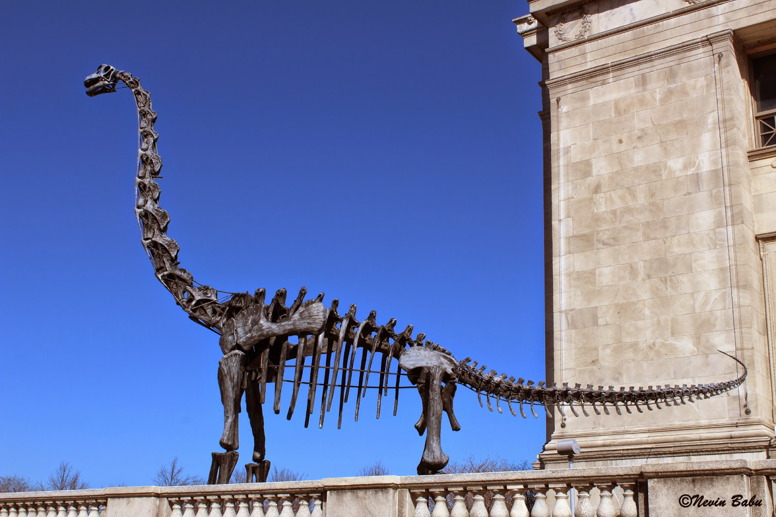 Dinosaur Replica Outside Chicago Field Museum Through