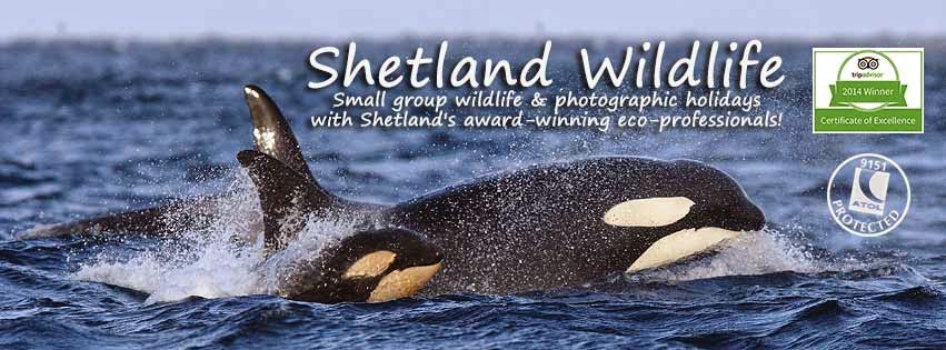 Shetland Wildlife Photo Blog