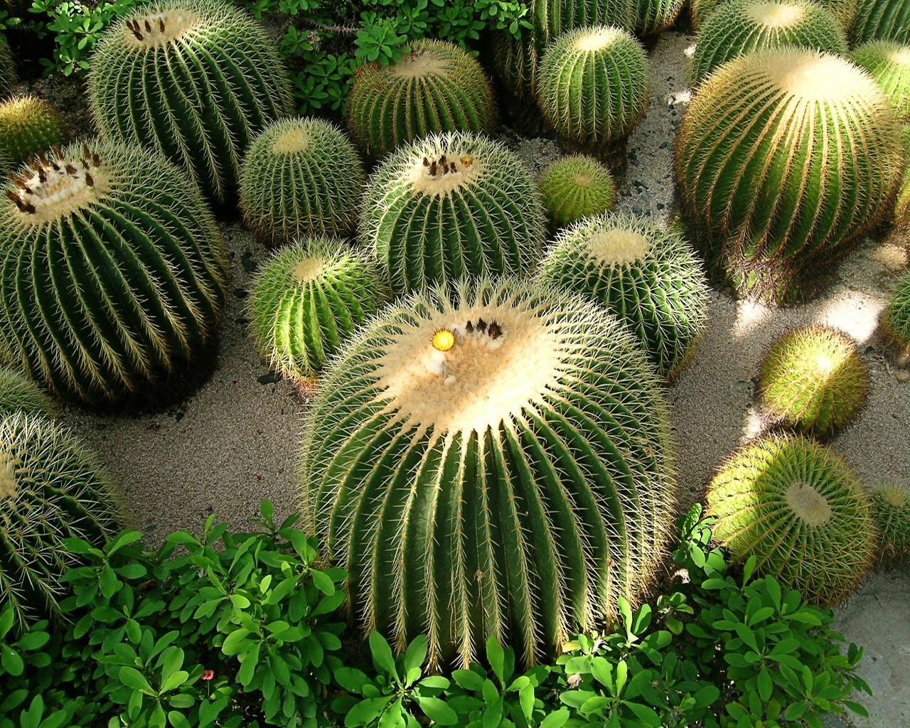 http://2.bp.blogspot.com/-T24zL3UU_aU/TmnKJHx6lZI/AAAAAAAAEmE/ioS6iltIn8c/s1600/Cactus%2B2.jpg