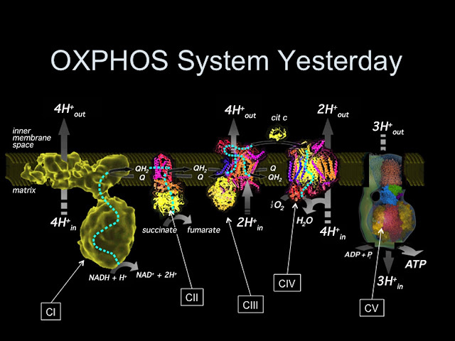 OXPHOS System Yesterday