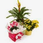 Colurful Flowers & Plants delivery in New Zealand with price