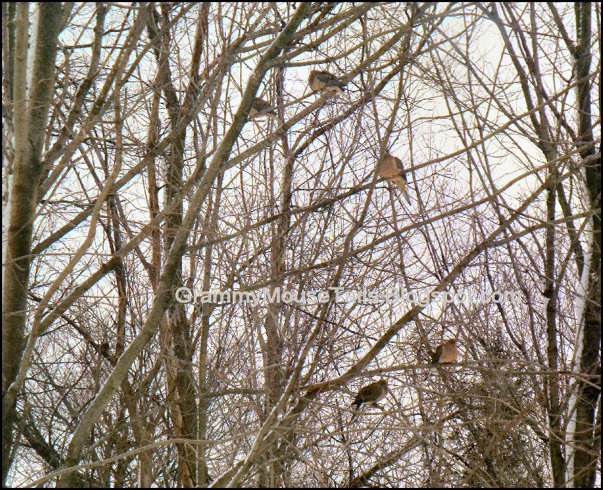 chilled doves in a bare tree winter photo image
