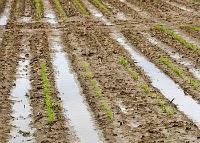 best garden tiller soil