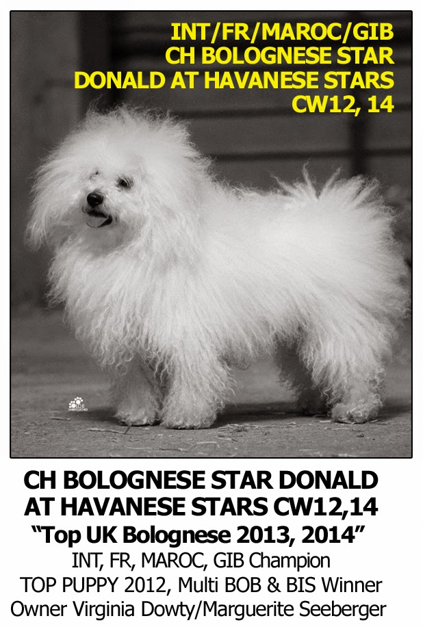 Best Dog Shampoo for Bolognese