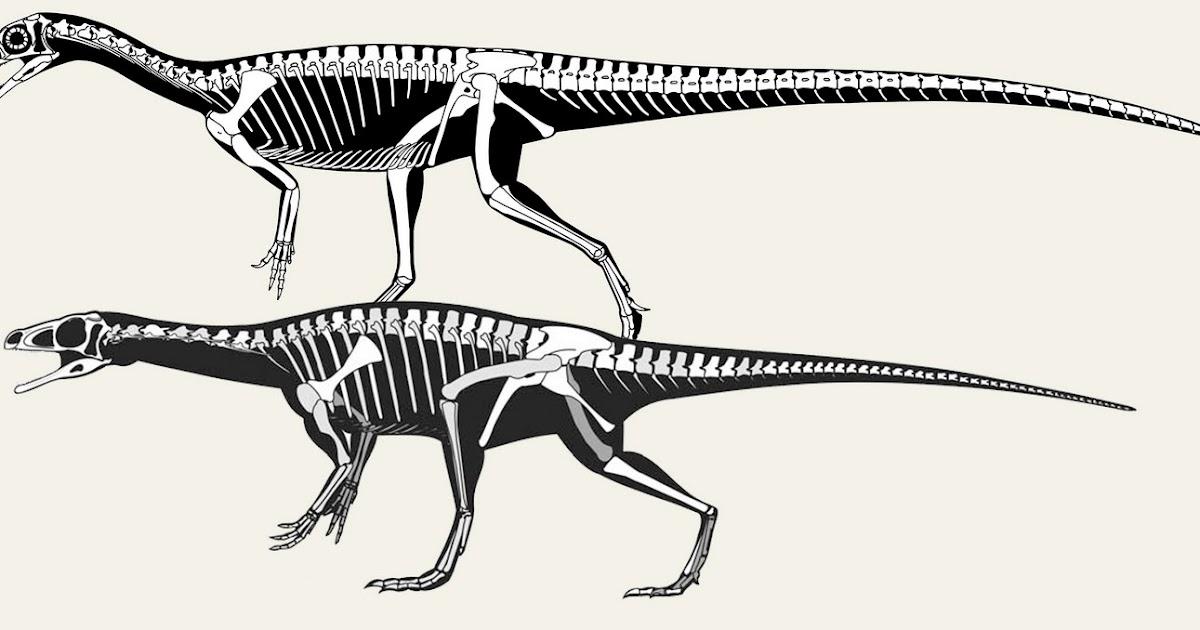 skeletal drawing  skeletal reconstructions  schematic vs realistic