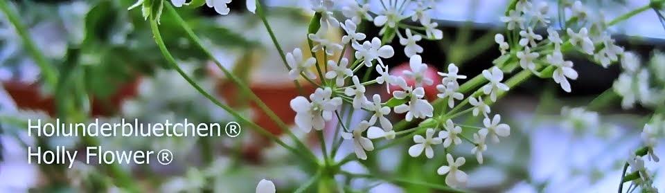 Holunderbluetchen