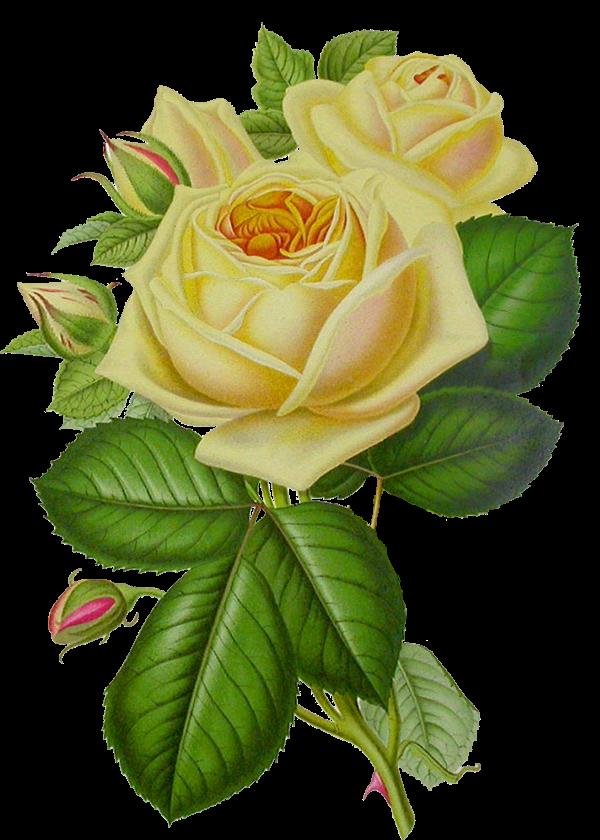 Poemas de amor y desamor - Tu Breve Espacio.com