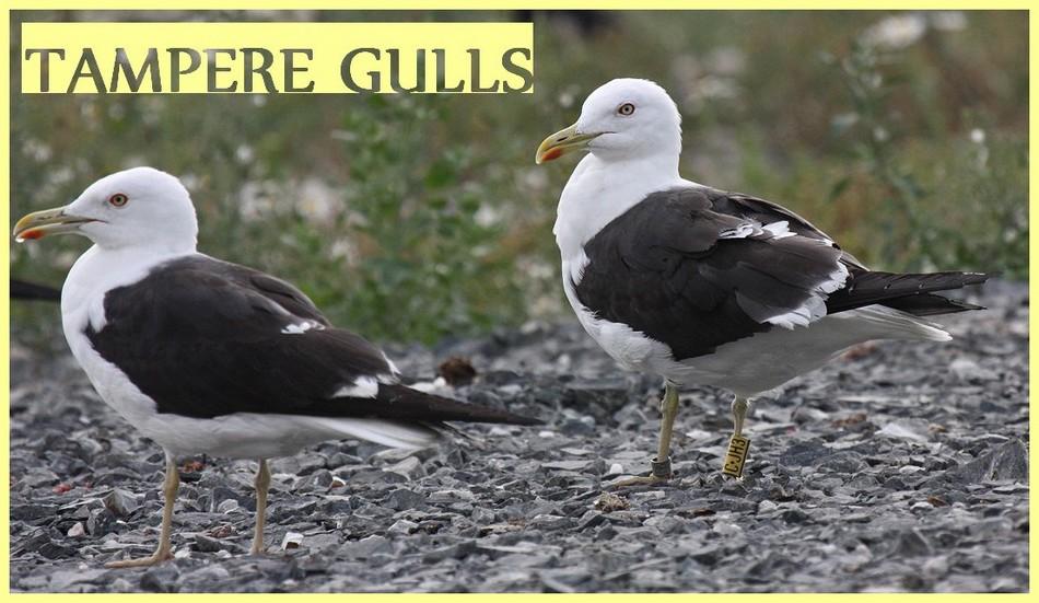 Tampere Gulls