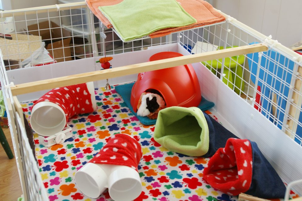 Cute Guinea Pig Cages Guinea Pig Cages Ain't What