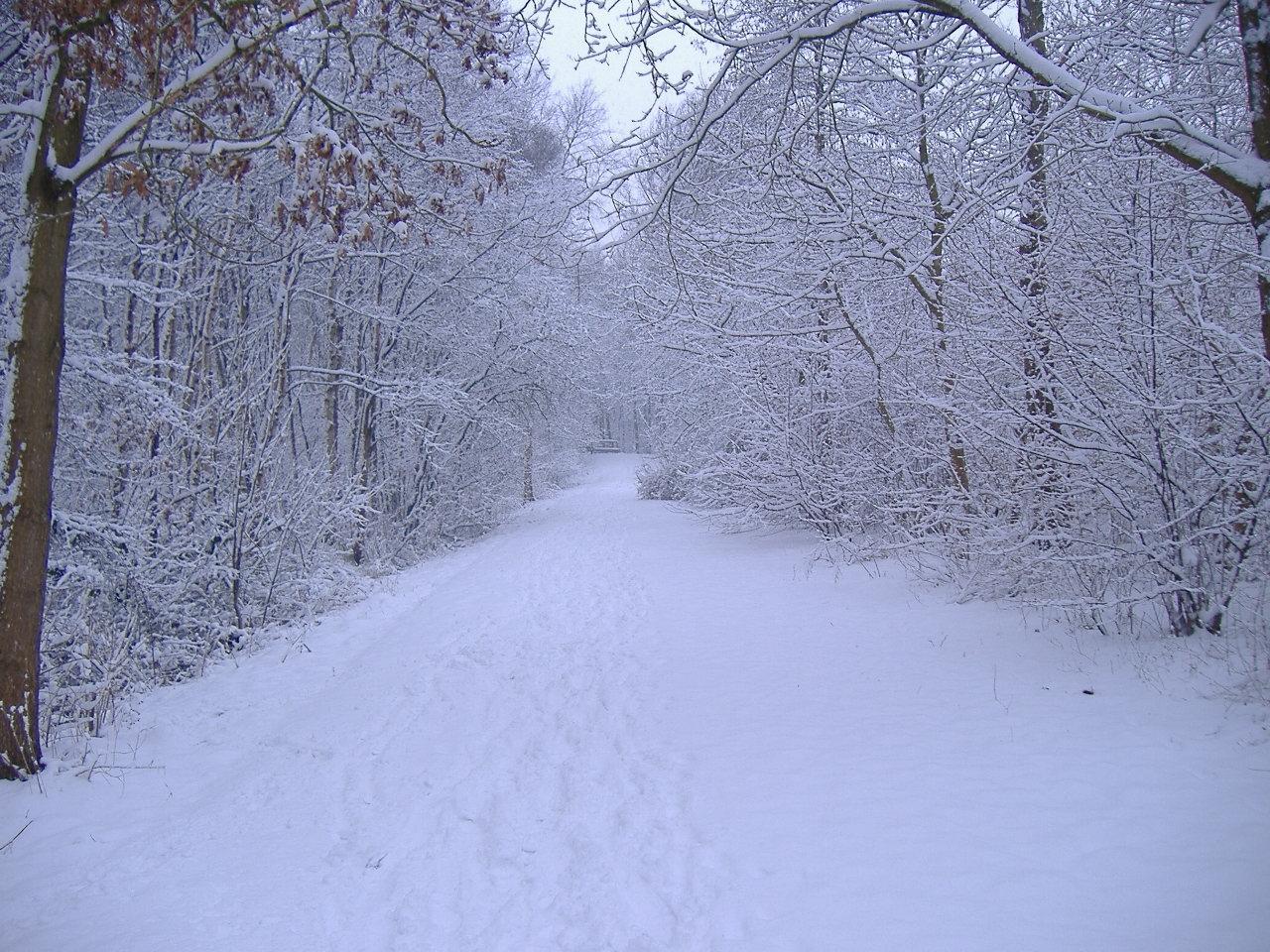 janelle mcintosh winter scene background