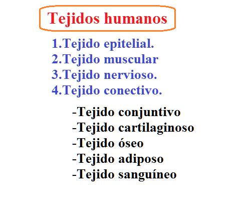 Tejidos humanos, histología