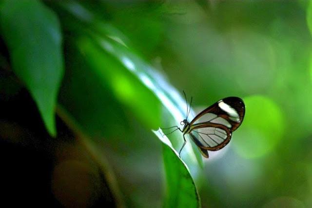 przeźroczyste motyle