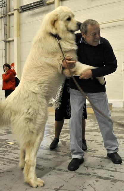Фото Укринформ:друг собаки