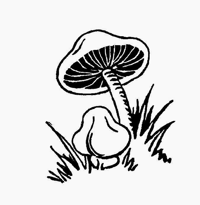 http://2.bp.blogspot.com/-T4ZupooCJlI/U1Kfy5KrAkI/AAAAAAAATns/caXtXj9fUAU/s1600/p_p_2_mushrooms.jpg