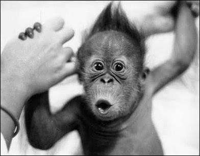Baby Monkey Fu