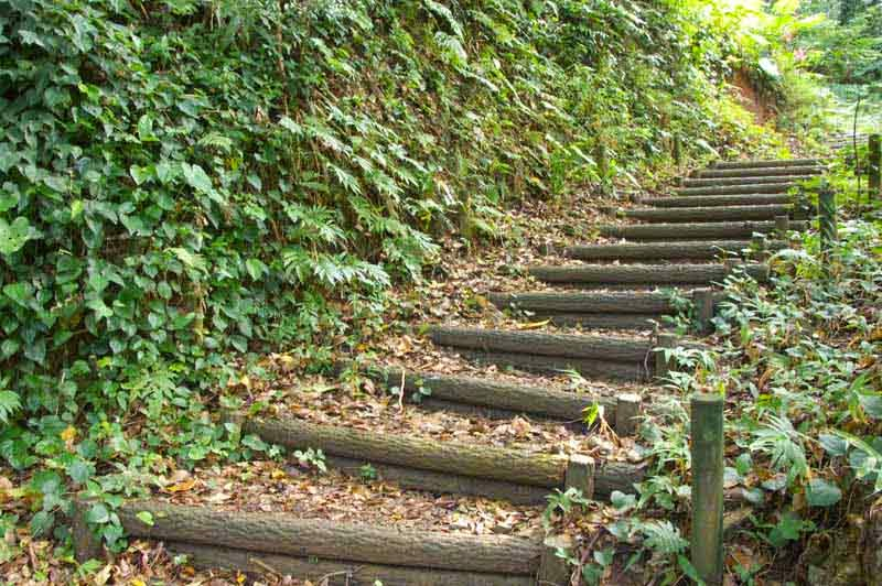 uphill trail, stairs