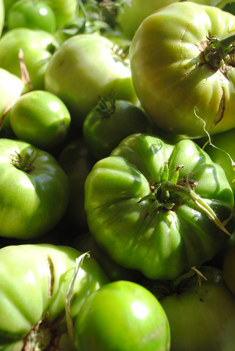 how to keep green tomatoes green