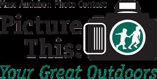 Mass Audubon Photo Contest