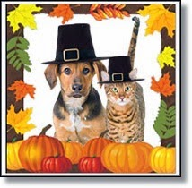 Cat and dog in Thanksgiving outfits