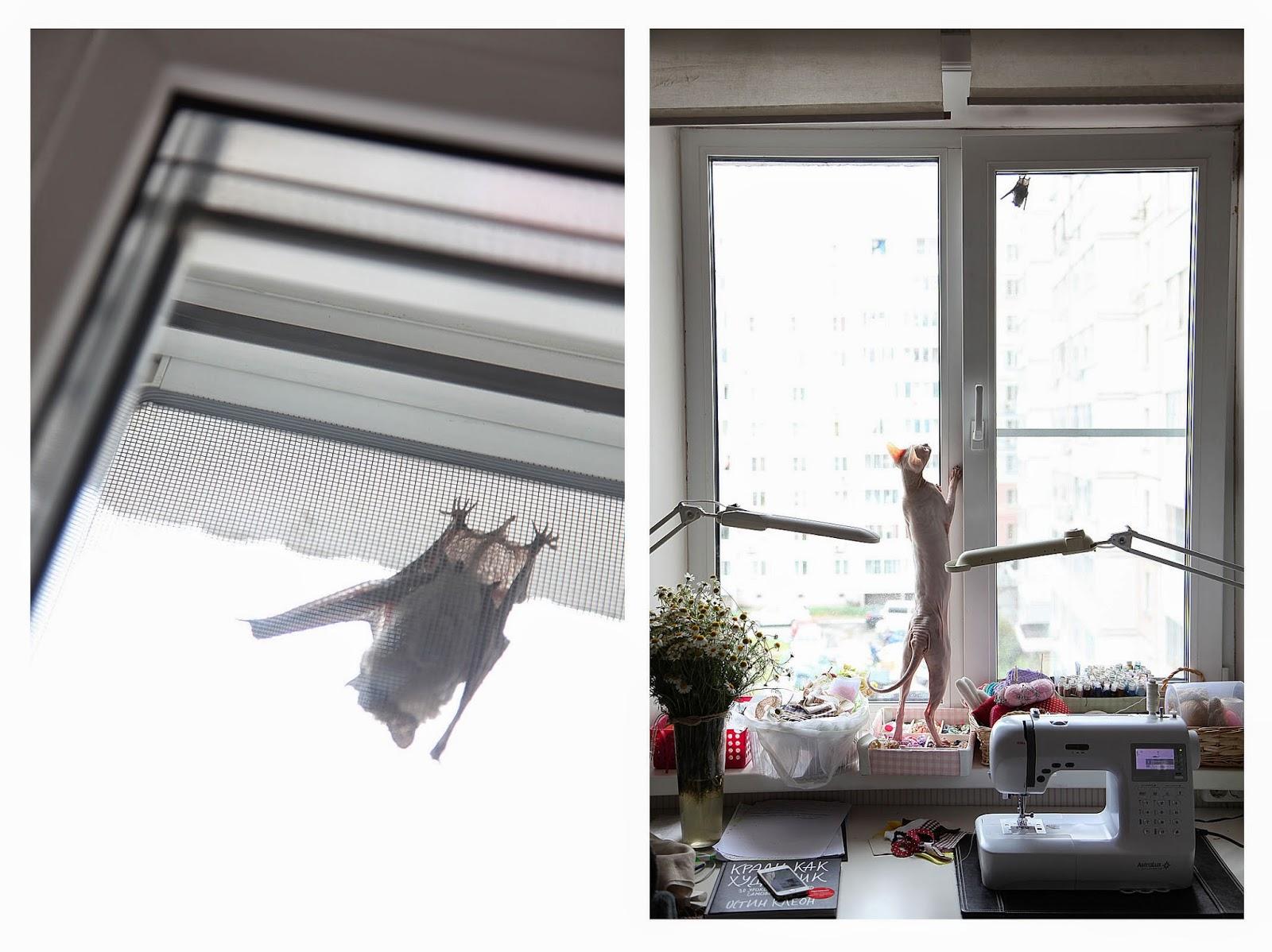 донской сфинкс, лысая кошка, гася
