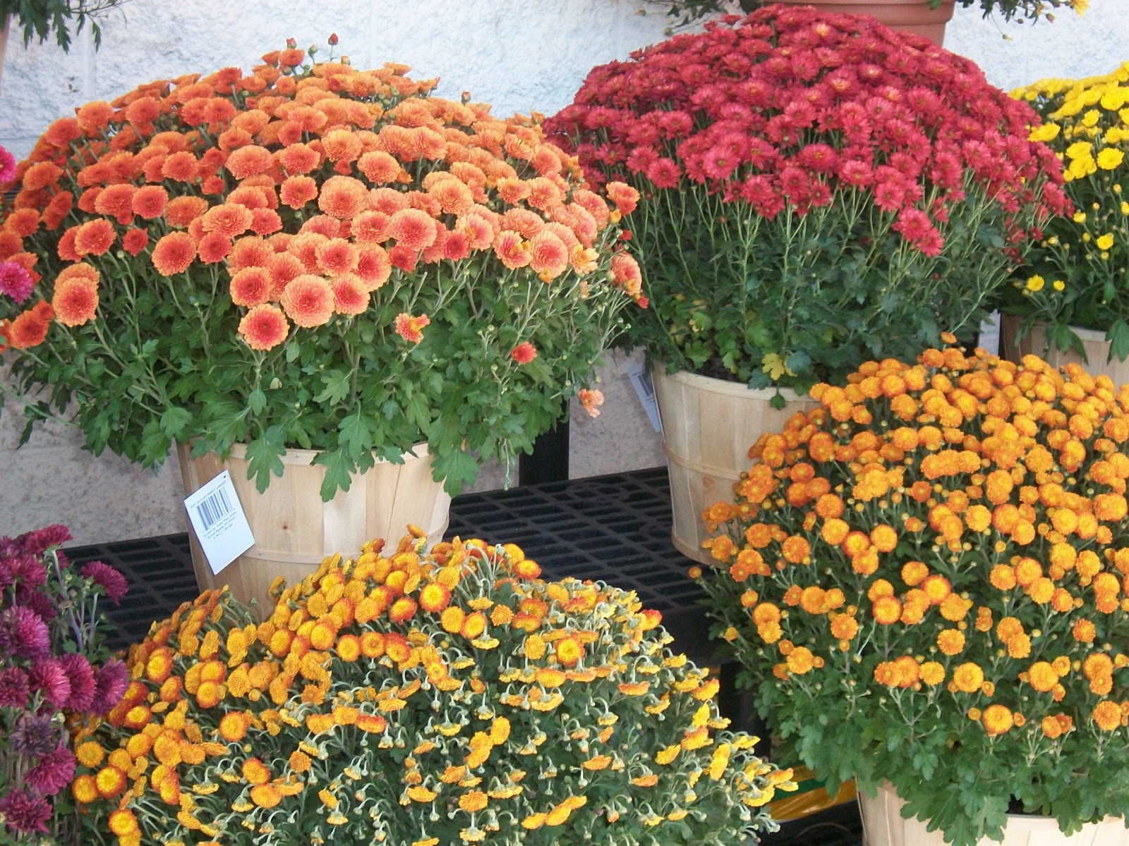 Top 28 Plants In The Fall Fall Is A Great Time To Buy