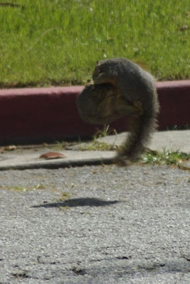 Squirrels fighting funny pictures