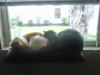 Seph and Zoey snuggle on their window perch.