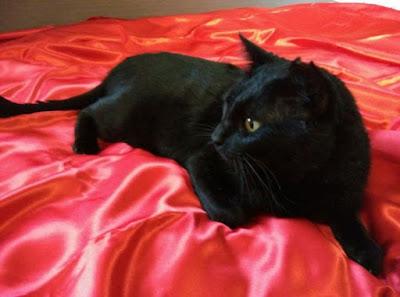 EN ADOPCIÓN: La historia de Otto. Rivanimal. Gato. Ver. Oír. Contar.