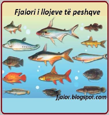 Fjalori i llojeve te peshqve
