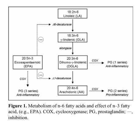 Metabolismo degli acidi grassi omega-3 e omega-6