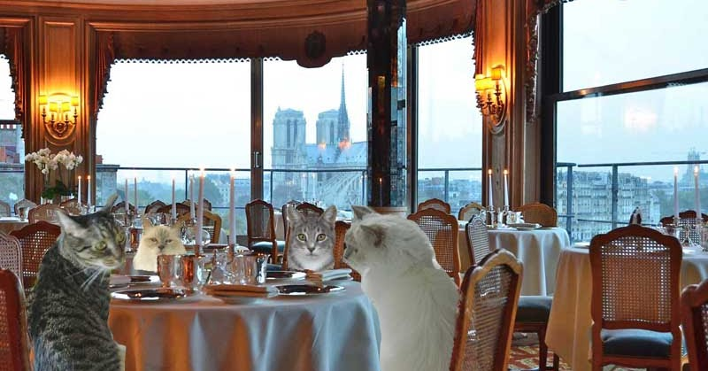 Tabby Cat Club Paris Dinner At Tour D 39 Argent And A