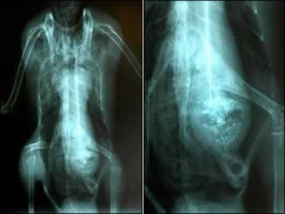 Some Weird And Bizarre X-RAY Pictures