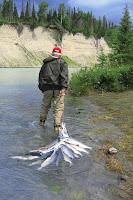 Pêche de saumon sauvage