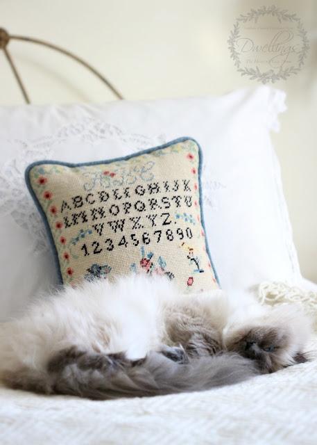 Bella, our Himalayan kitty and sampler pillow