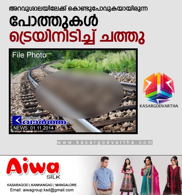 Kasaragod, Kerala, Adkathbail, Train, Died, Railway-track, Smell, Buffalo, 2 buffalos dead after train hits.