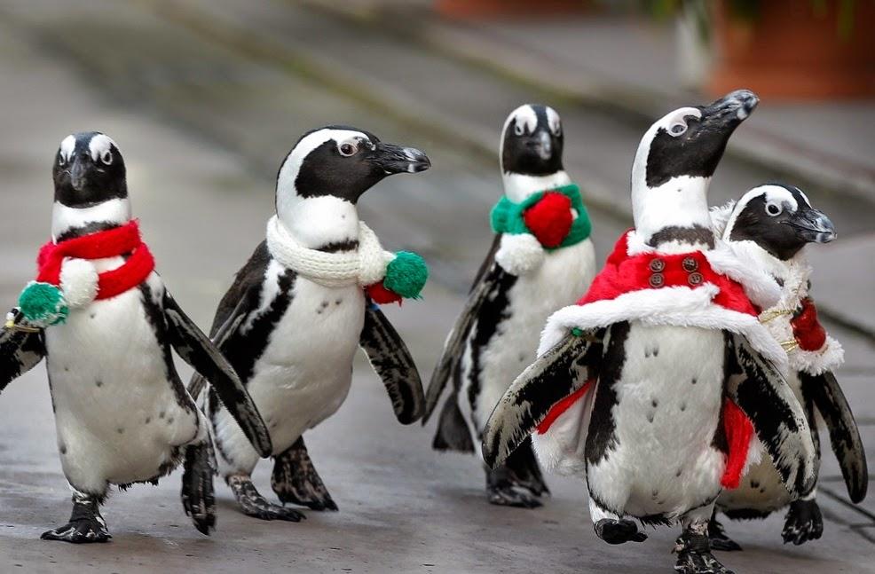 Christmas penguins wallpaper