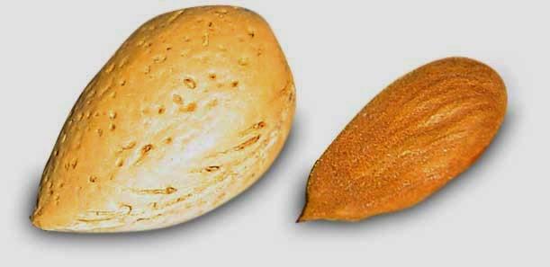 Manfaat almond untuk kesehatan & kecantikan