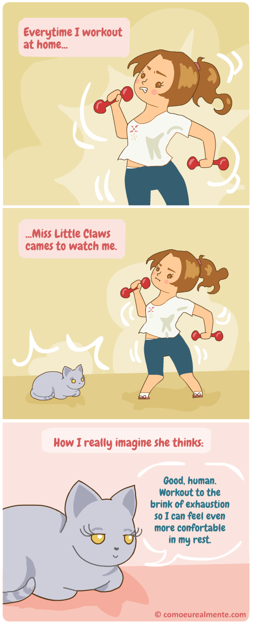 How I really imagine my cat feels when I work out: very pleased with herself for not having to do anything but sleep.