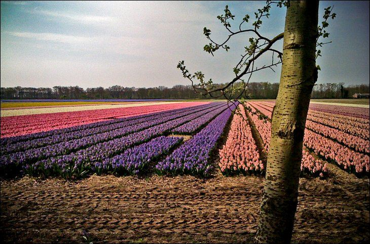 Netherland in May Month Seen On www.coolpicturegallery.us