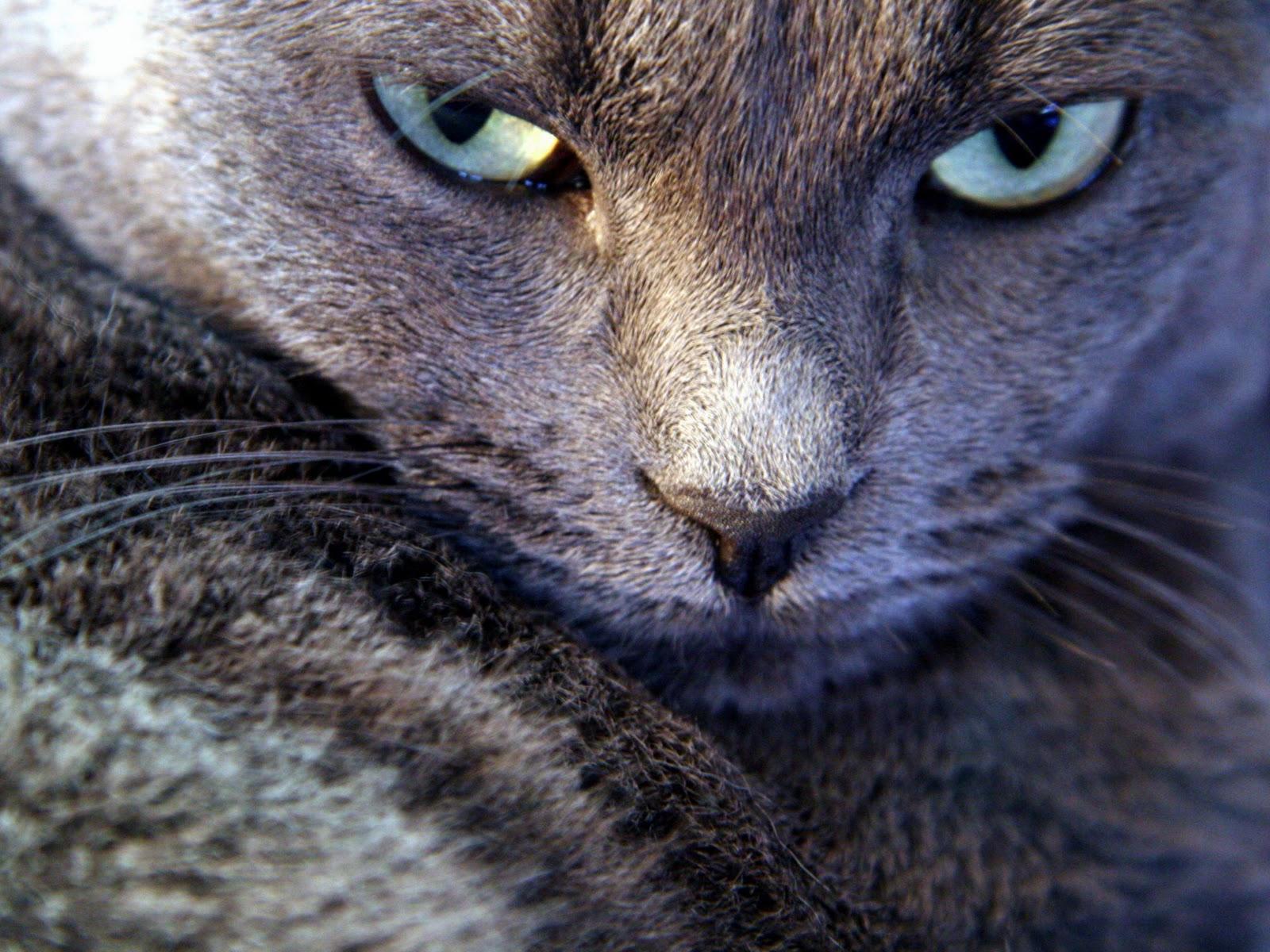Best Wallpaper Cat Mystical - XQ+%25281%2529  Pictures_99254 .jpg