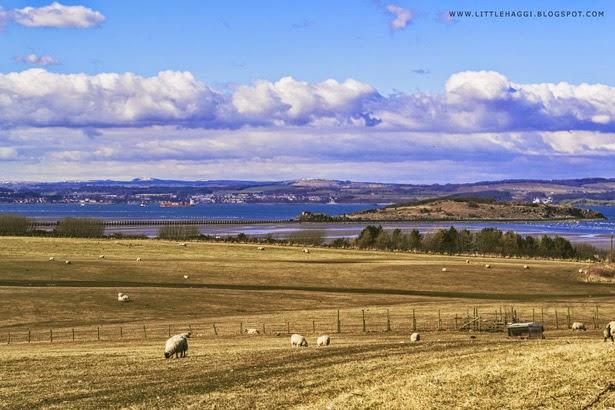 Fotografía campo ovejas en Cramond