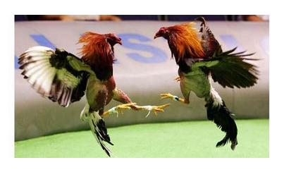 Gay galeras de gallos no circuncidados gran ereccin a