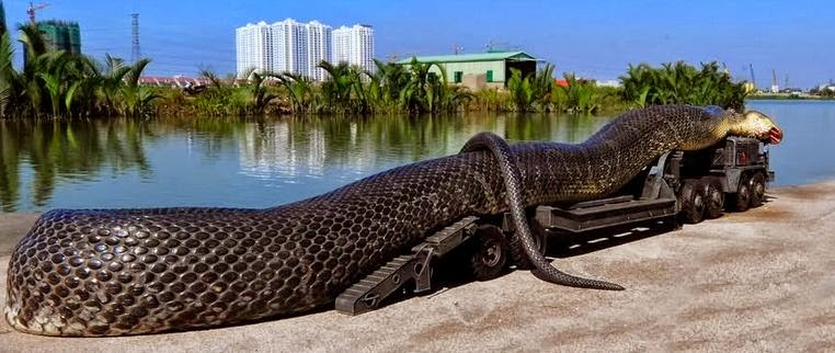 Самая большая анаконда в мире размеры