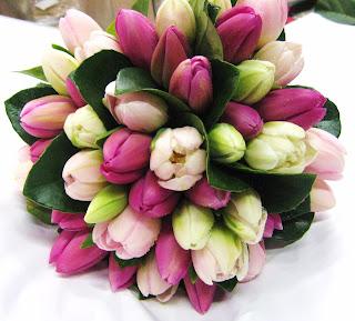 Tulipanes rosados y lilas